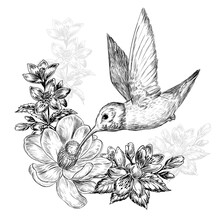 Hand Drawn Sketch Illustration With Hummingbird Bird And Beautiful Flowers On White Background