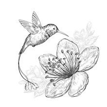 Hand Drawn Sketch Illustration With Cute Hummingbird Bird And Beautiful Flowers On White Background