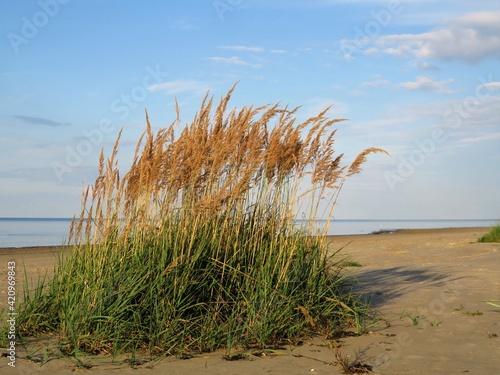 Fotografiet Beachside plants
