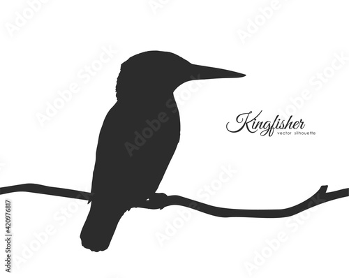 Valokuva Silhouette of Kingfisher sitting on a dry branch.