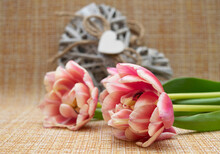 Tulips Lie On Burlap, In The Background A Heart Made Of Wooden Sticks Of Gray Color