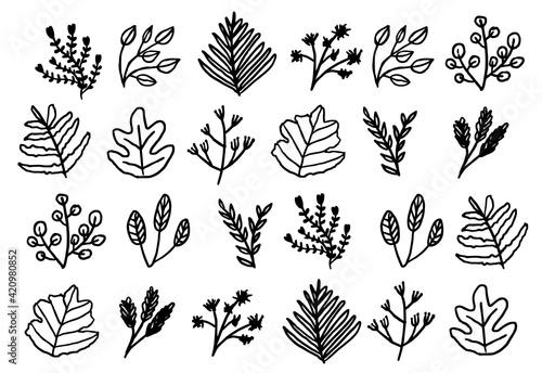 Fototapeta Hand drawn plant leaves, Tropical plant leaves, Botanical doodle obraz