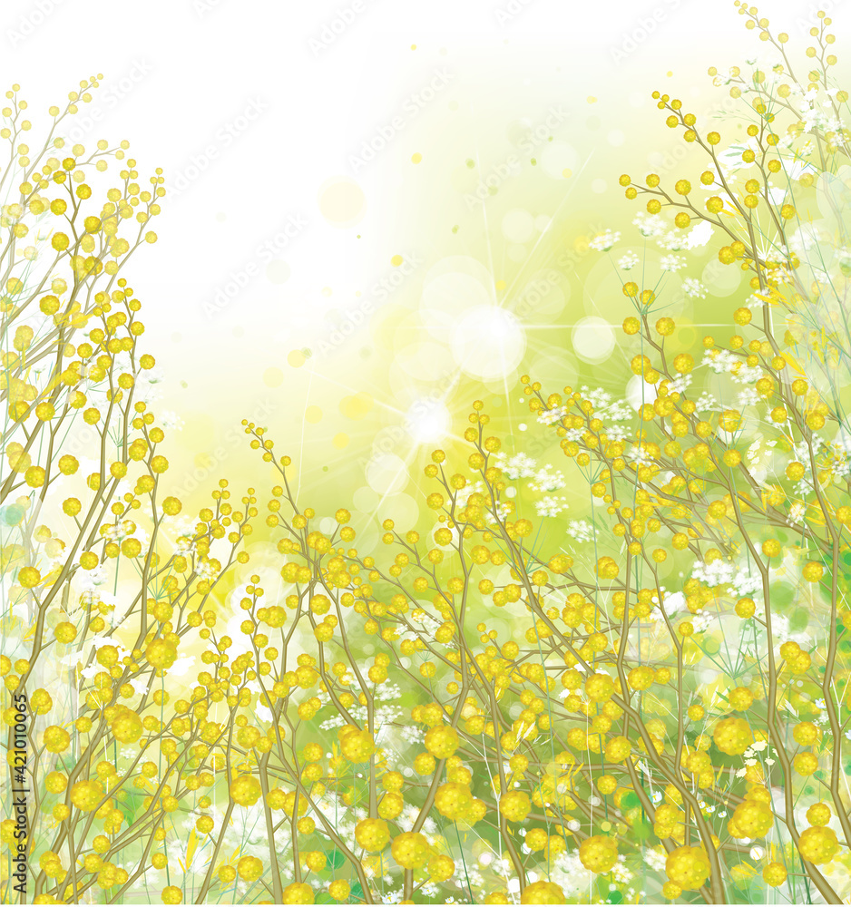 Fototapeta Vector spring,  floral background. Yellow mimosa flowers and plants.