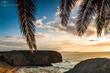 plaza, dłon, tropikalna, morski, sundown, drzew, niebo, oceanu, piach, woda, ile, charakter, podróż, wschody, blękit, dłon, krajobraz, raj, wybrzeze, kokos, lato, palma, hawaje, urlop, drzew