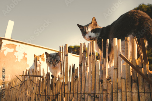 Papel de parede Gatos Castell