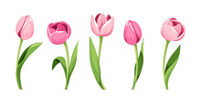 Vector Set Of Five Pink Tulips Isolated On A White Background.