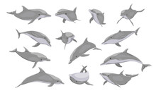 Common Bottlenose Dolphin Set. Dolphins Tursiops Truncatus In Different Poses. Realistic Vector Secondary Water Mammals