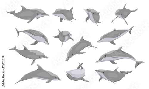Fotografie, Tablou Common bottlenose dolphin set