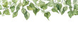 canvas print picture - Long seamless banner with hanging ivy leaves