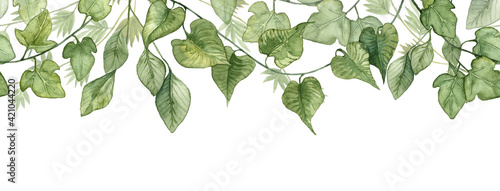 Fotografie, Tablou Long seamless banner with hanging ivy leaves