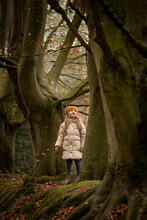 Little Girl In Large Trees In The Forest. Beeches