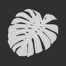 Illustration Of A Gray Leaf Monstera Isolated On A Dark Background