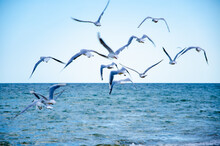 Seascape Background Seagulls Flying Over Sea Against Blue Sky
