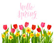 Daffodils and Tulips vector banner