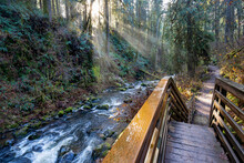 Stairs Along McDowell Creek Just Below Majestic Falls Near Sweet Home Oregon