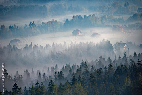 Fototapeta Las w mgle obraz