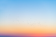 Silhouette Of Seagulls Birds In Far Distance In Colorful Sky Flying In Siesta Key, Sarasota, Florida With Orange Blue Colors Of Sunset Dusk Twilight Near Beach