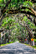 Famous Magnolia Avenue Street Road Shadows With Live Oak Trees Canopy And Hanging Spanish Moss In St. Augustine, Florida On Summer Sunny Day