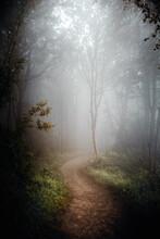 Waldweg Im Nebel Mit Herbstlicher Stimmung