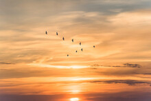 Migratory Birds Flying In The Shape Of V On The Soft And Blur Pastel Colored Sky Background. Gradient Clouds On The Beach Resort. Nature. Sunrise.  Peaceful Morning.Instagram Toned Style