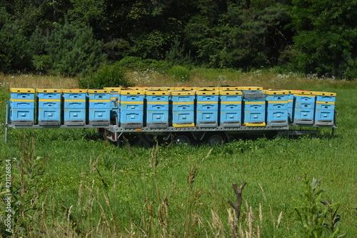 Fototapeta Ule dla pszczół na platformie do przewożenia w różne miejsca obraz