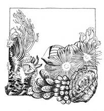 Coral Reef Under Water With Its Marine Inhabitants - Fish, Anemones, Algae. Black And White Ink Illustration.