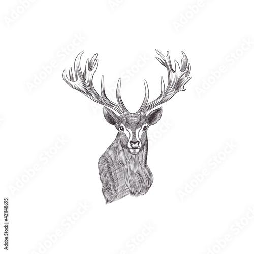 Tela deer sketch