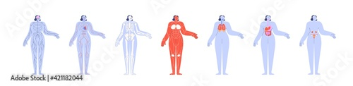 Fotografia Anatomy of human body and its internal structures