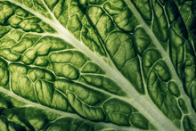 Napa Cabbage Texture . Macro Shot