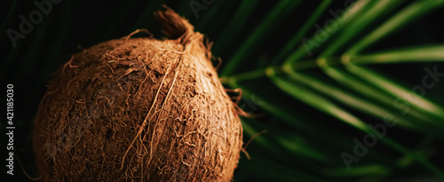Canvastavla Coconut and green exotic leaf on dark background, food and nature closeup