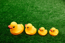Rubber Ducks Family , Yellow Toy Ducks On Green Background