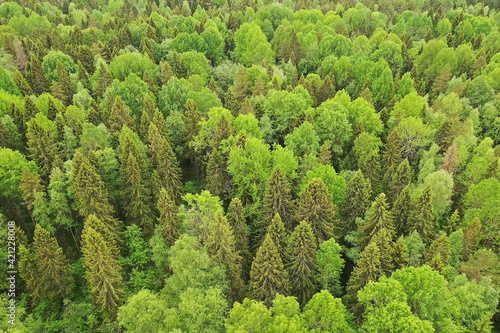 Fototapeta forest top view, landscape panorama view of summer forest with quadrocopter aerial view obraz