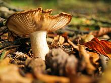 Mushroom Funghi Toadstool