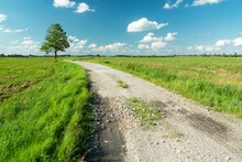 A Gravel Road Through A Green Meadow And A Lonely Tree On The Horizon