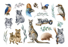 Australia Animal And Bird Watercolor Set. Hand Drawn Kangaroo, Koala, Kookaburra, Echidna, Kingfisher, Cassowary, Eucalyptus Branch Realistic Collection. Astralia Wildlife Flora And Fauna Set.