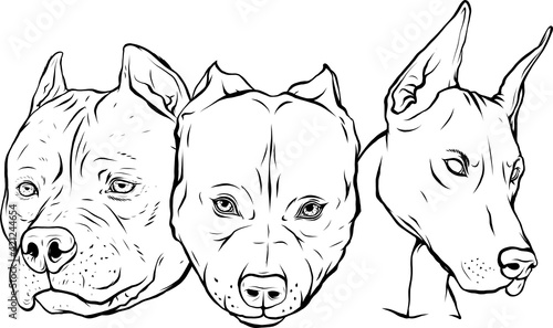 Photo draw in black and white of Heads of dogs pitbull dobermann bulldog vector
