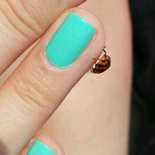 Close-up Of Lady Bug On Female Fingers