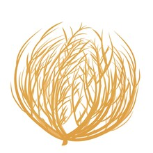 Tumbleweed In Cartoon Style, Flat Isolated On White Background. Dry Old Bush, Plant, Circle Shape. Wild West Symbol, Dessert Grass.