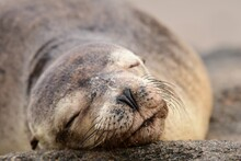 Sleeping Beauty - A Happy Galapagos Sea Lion