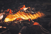 Close-up Of Autumn Leaves On Wood
