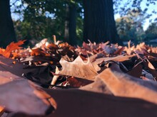 Close-up Of Autumn Leaves On Fallen Tree