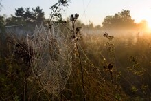 Beautiful Sunrise In Nature. Dew On Spider's Web