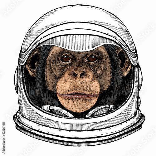 Papel de parede Vector chimpanzee portrait