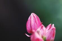 Close-up Of Pink Flower Against Black Background