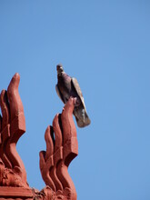 Low Angle View Of Pigeon Perching On Palace Rooftop In Phnom Penh, Cambodia.