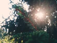 Sunlight Streaming Through Leaves