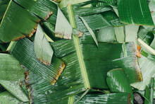 Wet Banana Leaves Texture Flat Lay View