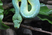 Close-up Of A Snake On Tree