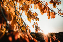 Sunset Trough Autumnal Leaves