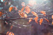 Close-up Of Spider Web On Plant During Autumn